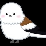 bird_shimaenaga